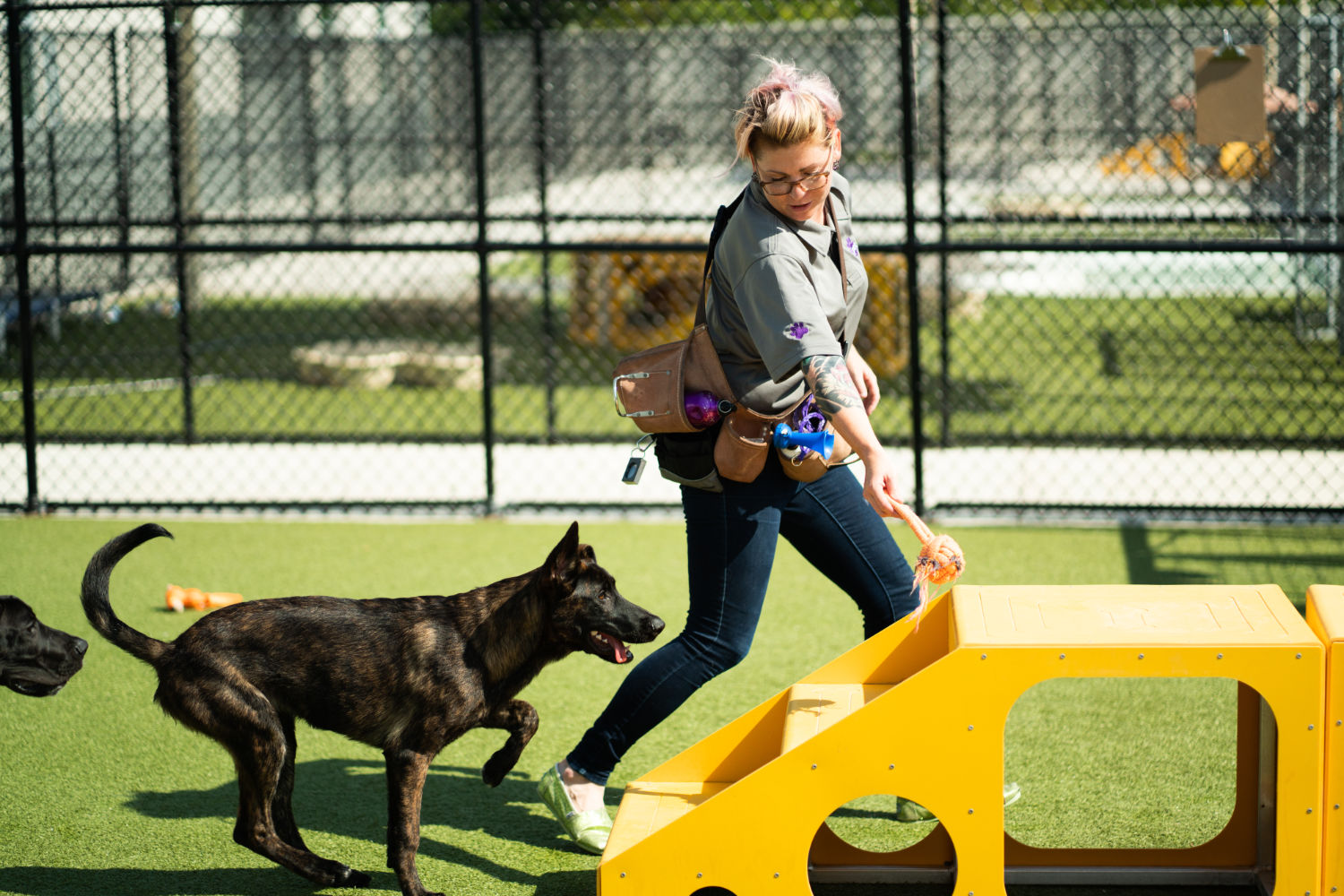 female running dog through obstacle course
